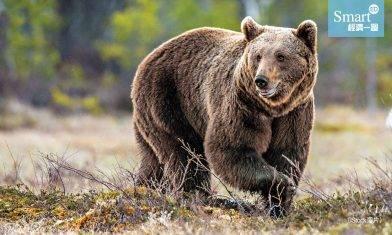 股市的升與跌:「牛市」與「熊市」的由來