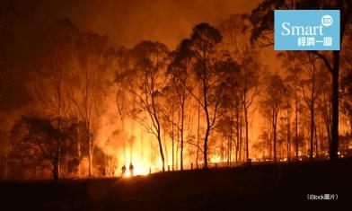 澳洲山火釀生態災難!4.8億隻動物死亡!坎培拉空氣質素全球最差