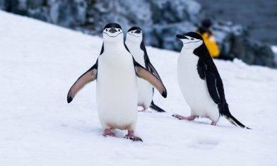 成為第一隻企鵝 改革企業的先驅