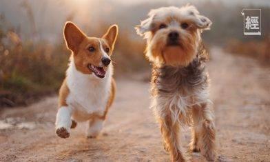 藍十字寵物保險送免費新型冠狀病毒保障 成功登記可獲最高2,000元保障、恆常保費6折