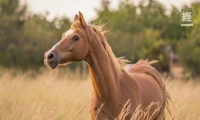 非洲馬瘟於泰國爆發 馬匹病死率高達95% 中國高度警惕病毒由境外傳入國內