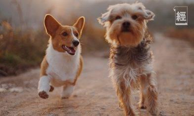 寵物保險投保前要留意4大細節 超過幾多歲冇得投保?得貓、狗受保障?|劉啟明