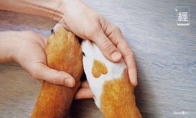 第三張虛擬保險牌照|OneDegree推寵物保險 狗隻每月保費低至74元 冀1年做1萬張保單
