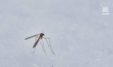 4個新冠肺炎的疑問 被蚊咬會受感染?比蒸口罩更危險的消毒方法是⋯⋯