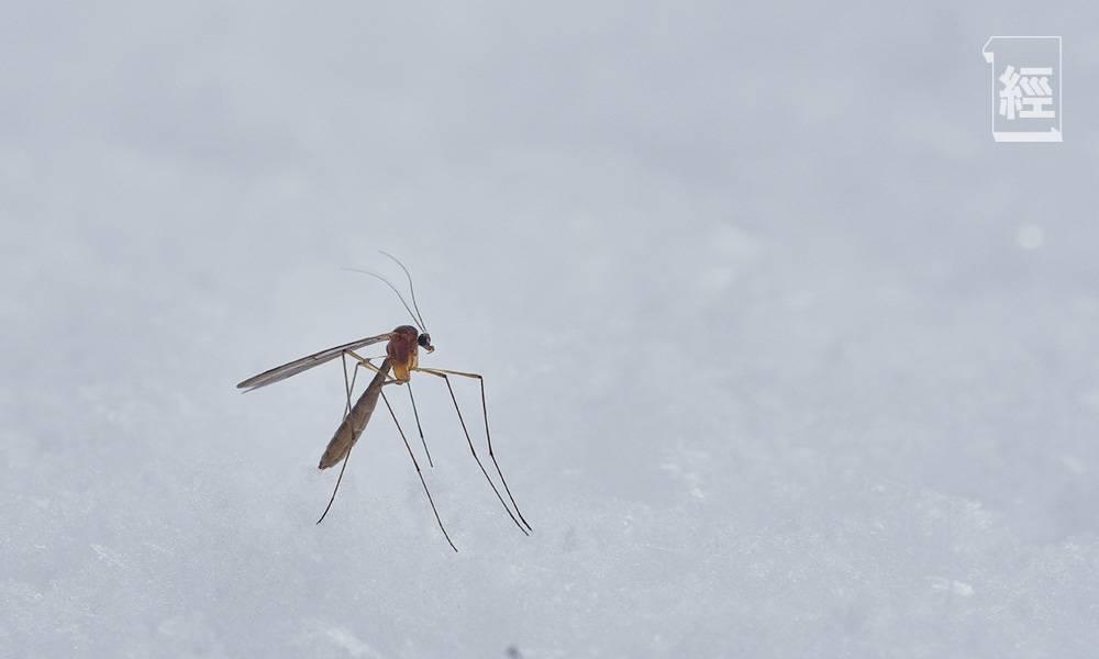 4個新冠肺炎的疑問|被蚊咬會受感染?比蒸口罩更危險的消毒方法是⋯⋯
