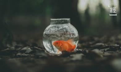 廢棄魚缸激活5G概念股靈感|傅允軒