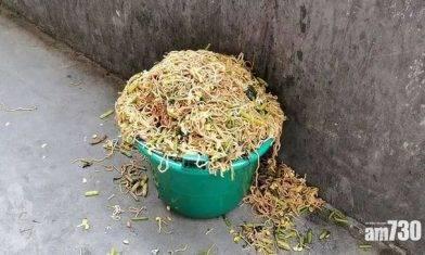 【餐飲浪費?】安徽一小學營養午餐太難食 塞爆垃圾桶