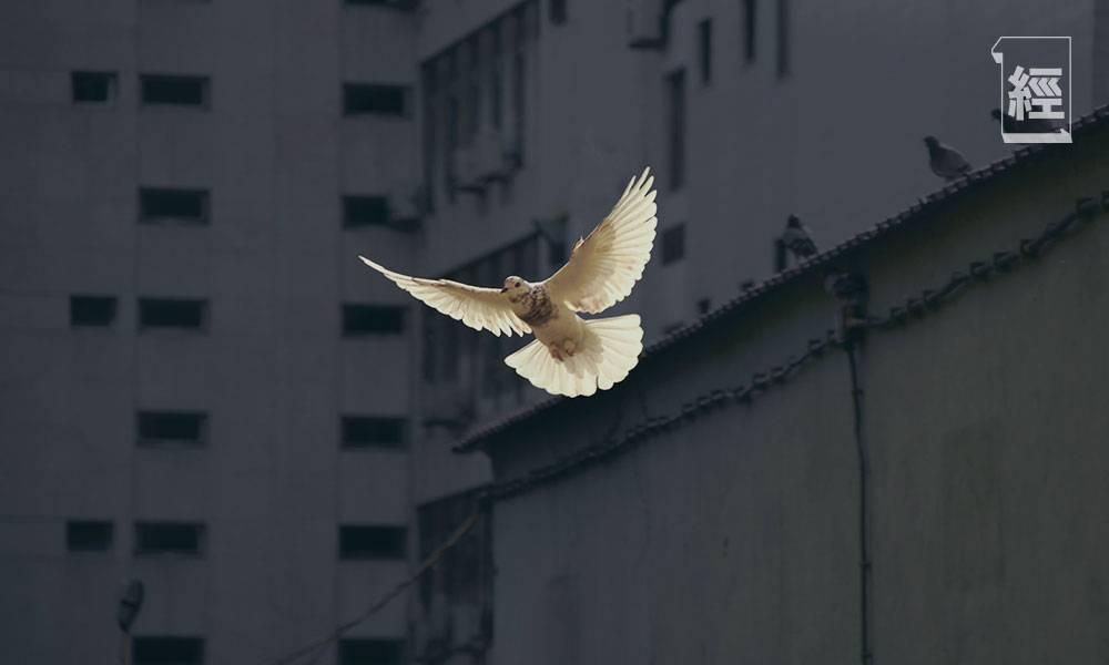 化身和平使者,減少無謂紛爭。圖片:unsplash