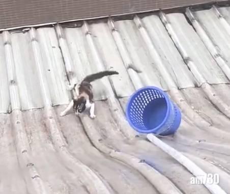 【網上熱話】救貓男危站簷篷助花貓脫困  網民︰有愛的男生最帥