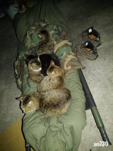 睡車庫被不明物體壓 睜眼後發現竟是6隻貓咪