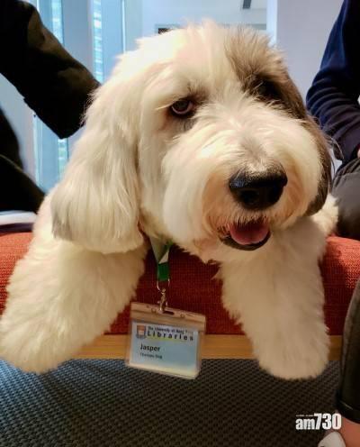 港大圖書館駐校治療犬Jasper逝世 終年12歲