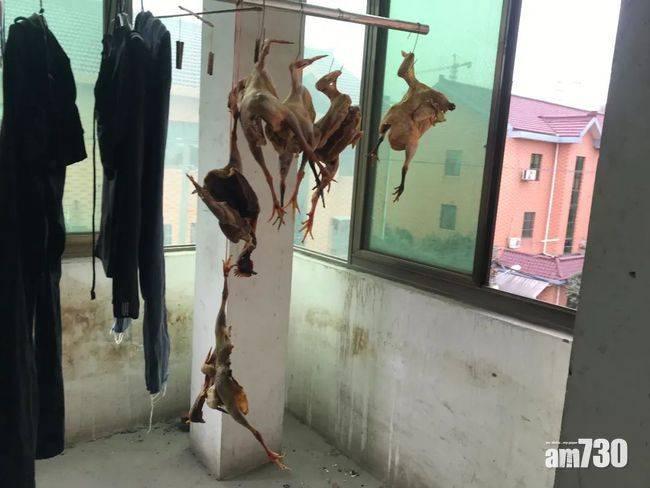 太想食走地雞鴨 杭州男狂偷39隻