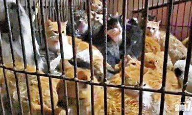 大量貓隻疑被盜至江門宰賣 商販:貓不是吃用來幹甚麼