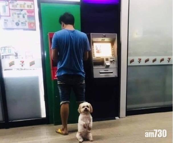 網上熱話|飼主提款狗狗當保鑣  網民︰養狗千日用在提款
