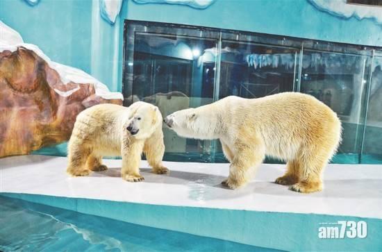 以「北極熊24小時陪伴」為賣點 黑龍江新酒店惹抨擊
