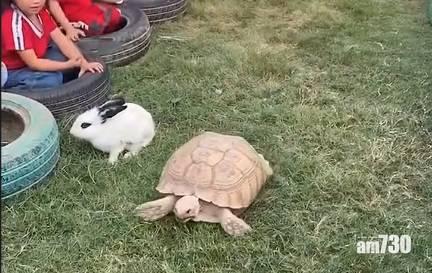 網上熱話|龜兔賽跑真實版  網民︰結局原來是真的