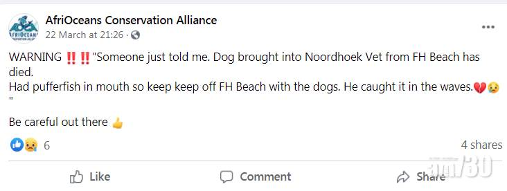 集體擱淺 海灘現數百雞泡魚屍  有狗食了中毒死亡