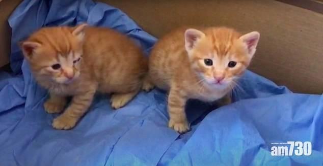 好媽媽 母貓叼著貓仔往醫院 救助醫生治眼疾(有片)