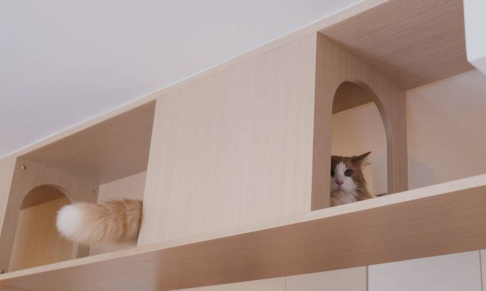 【裝修設計】522呎和風貓咪部屋 設長型走廊滿足主子需求 附貓奴裝修注意事項