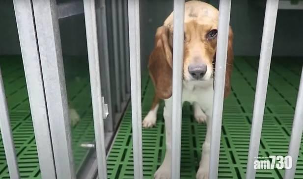 虐待動物|西班牙實驗室人員被揭剪甩老鼠頭 未麻醉從鼠眼抽血
