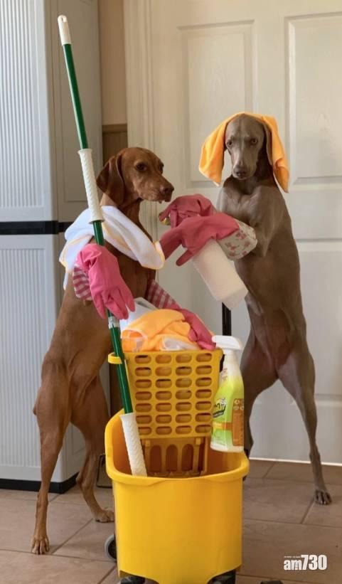毛孩天地|美婦訓練狗狗做家務 培養獨立性