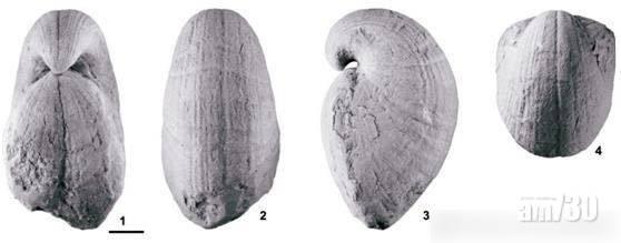 貴陽機場廁所詭異花紋大有來頭 係4億年前化石!