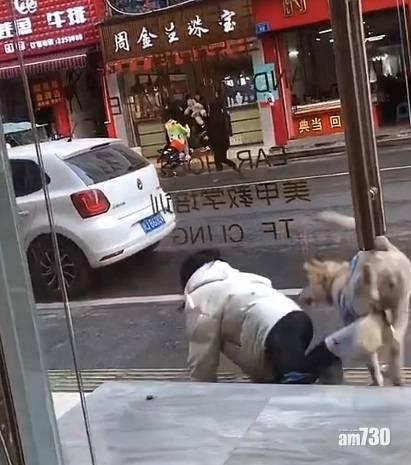 網上熱話|女子帶狗開舖遭推落地  網民︰俗語話女不養狗是對的
