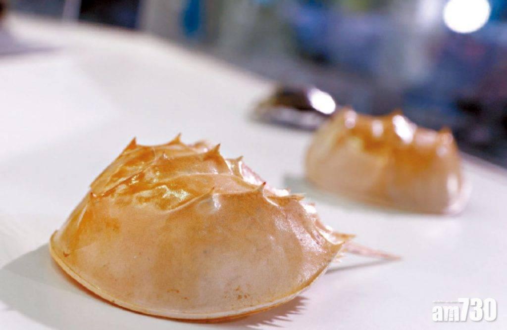 愛護環境 海洋公園辦本地瀕危動物保育日 全港不足百隻 眼斑水龜首現身