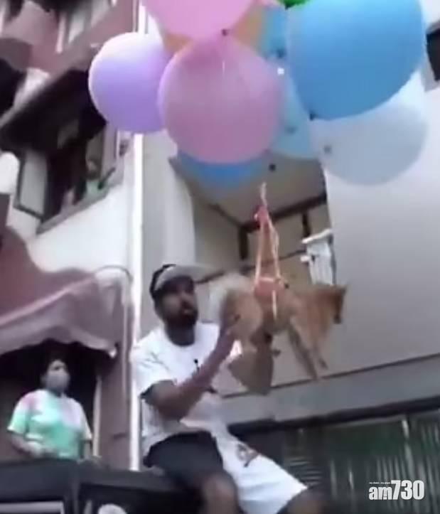 離譜|印度網紅將狗狗綁氣球升空 網民怒轟虐待(有片)