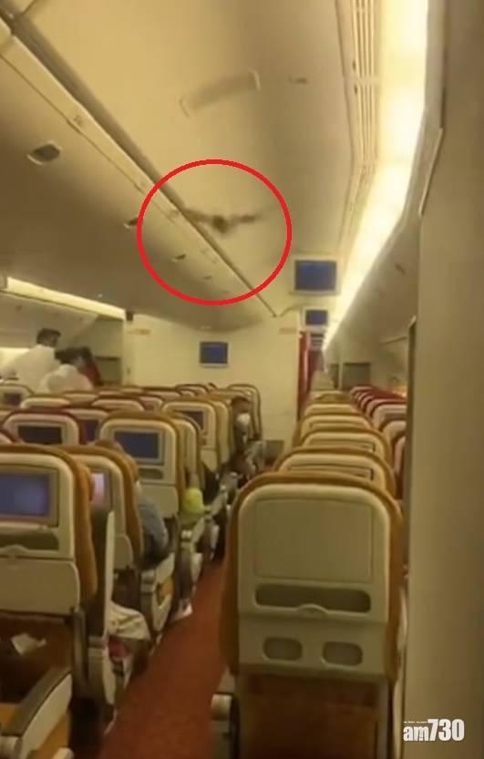 另類入侵|印度客機現不速之客  須折返德里機場緊急降落(有片)