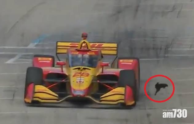差一秒變肉餅|松鼠仔闖跑道賽車駛近 飛身撲向牆再翻滾驚險避過 (有片)