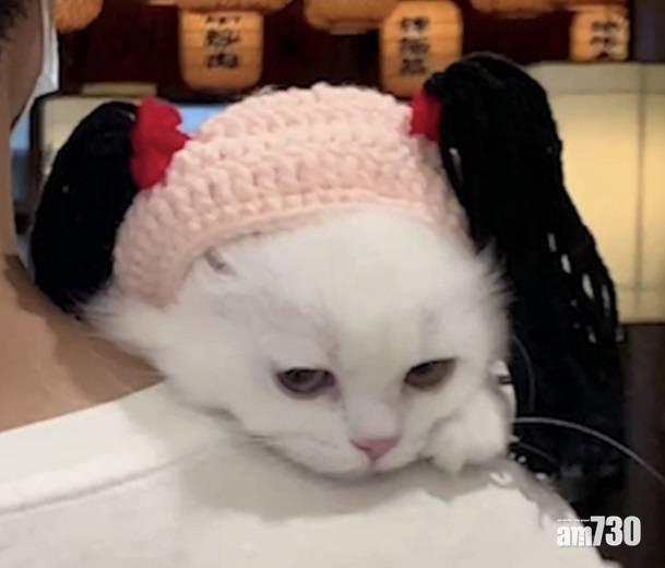 網上熱話 店家向紥孖辮客送肥牛  網民︰主人得食,白貓當災