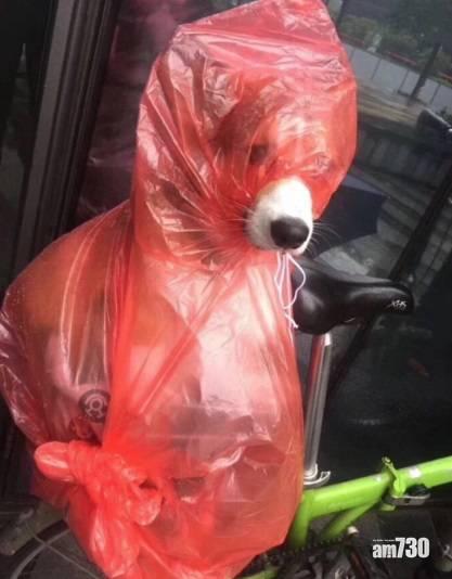 網上熱話 狗狗下雨外出穿專屬雨衣    網民︰狗眼看世界,不同了