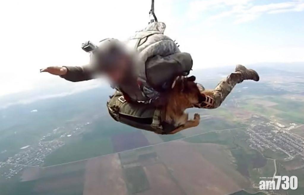 另類雷霆傘兵|俄羅斯軍犬高空跳傘  淡定著地迅速執行任務(有片)