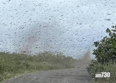 奇景|俄羅斯現龍捲風 睇真D原來係數百萬隻飛蚊 (有片)