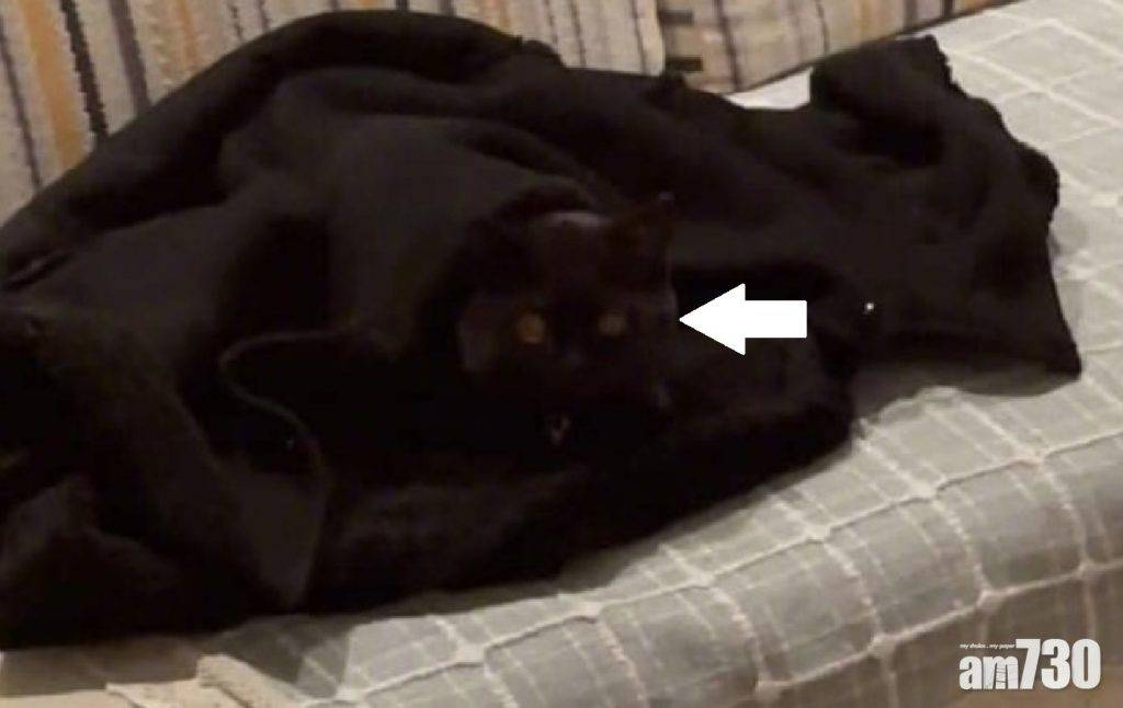 網上熱話 與黑貓捉迷藏      網民︰天生忍者