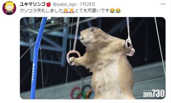 東奧熱潮|日本土撥鼠化身體操選手玩吊環 網民讚姿勢標準實拎金牌