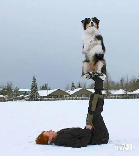 有片|網紅牧羊犬畫向日葵有板有眼  網民大讚:狗狗界梵高
