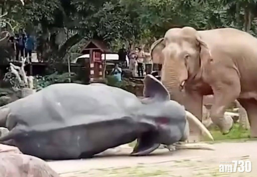 有片|泰國大象「呷醋」  竟然咁對一座死氣沉沉的象雕塑?
