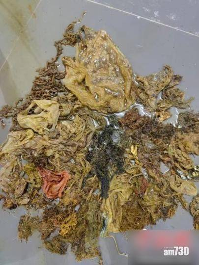 海龜誤食3公斤膠袋口罩 腸道壞死身亡