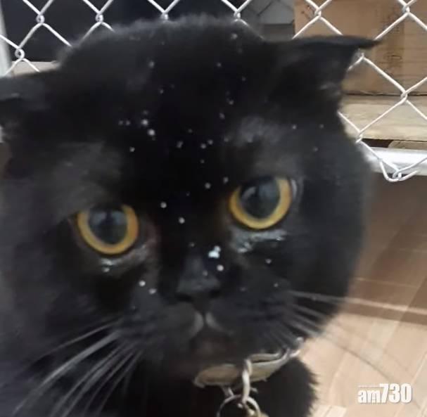 毛孩天地|貓B食相差致出現無辜受害者 網民:救命好可愛